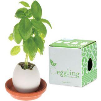 Eggling - Odlingsägg, Basilika
