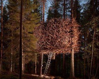 The Bird's Nest - Treehotel för Två